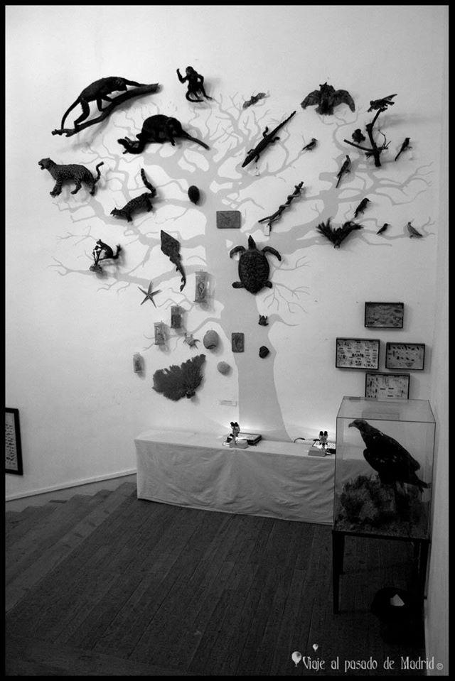 Muestra expositiva de fauna